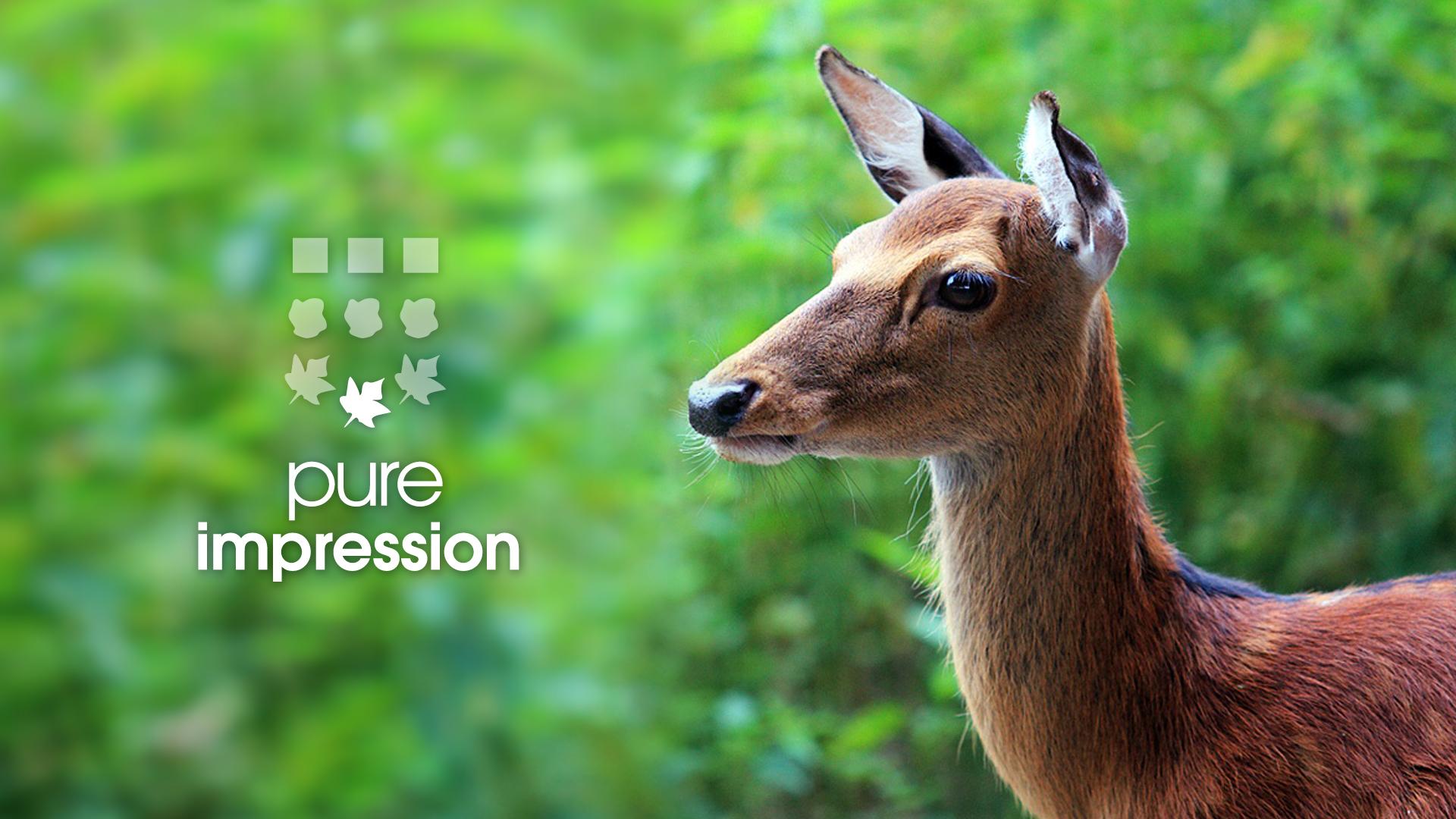 pure-impression-creation-campagne-eveiller-vos-sens-depliant-brochure-flyer-caconcept-alexis-cretin-graphiste-montpellier
